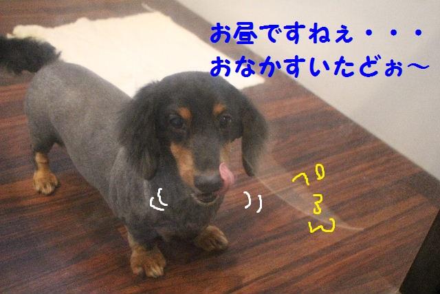 b0130018_8103629.jpg