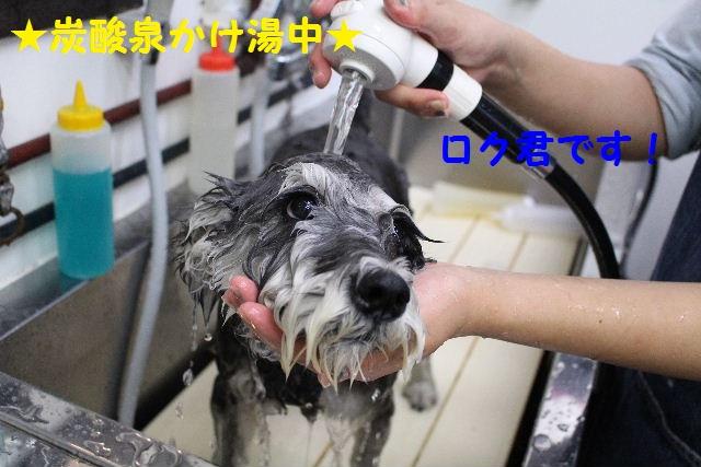長風呂の秘訣は・・・_b0130018_8124334.jpg
