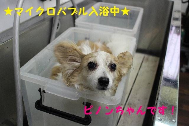 長風呂の秘訣は・・・_b0130018_815819.jpg