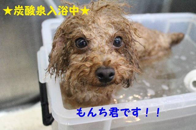長風呂の秘訣は・・・_b0130018_8171852.jpg
