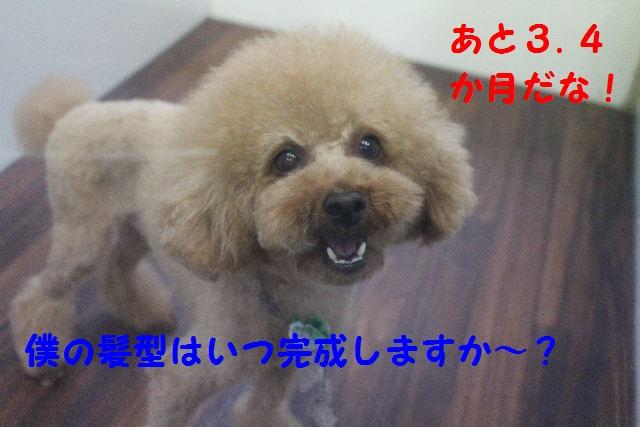 b0130018_8181887.jpg