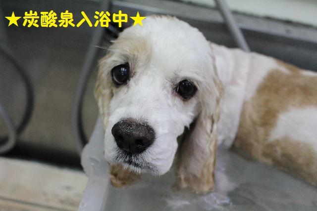 長風呂の秘訣は・・・_b0130018_8195585.jpg