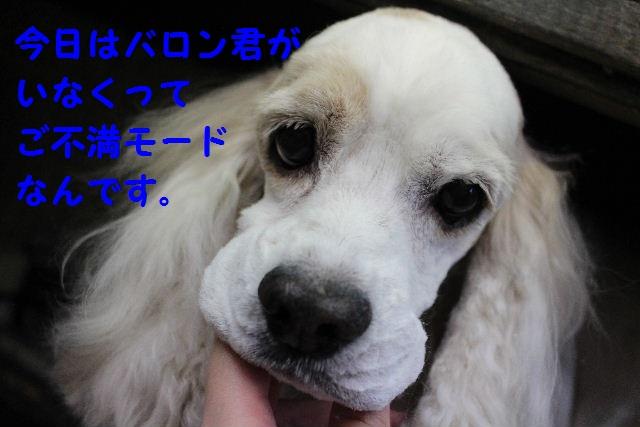 b0130018_8201830.jpg