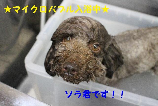 長風呂の秘訣は・・・_b0130018_821026.jpg