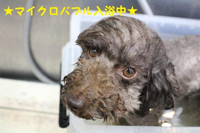 長風呂の秘訣は・・・_b0130018_8212786.jpg