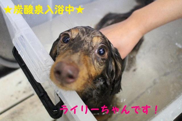 長風呂の秘訣は・・・_b0130018_854757.jpg