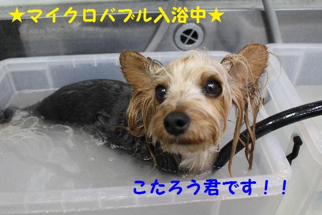 長風呂の秘訣は・・・_b0130018_875420.jpg