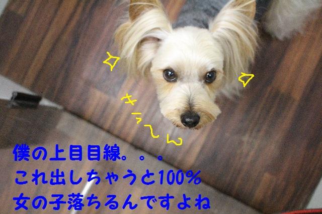b0130018_89327.jpg