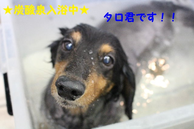 長風呂の秘訣は・・・_b0130018_894826.jpg