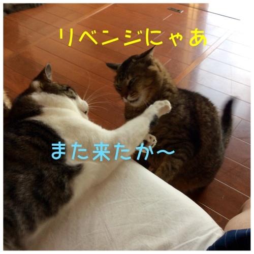 にゃんこ劇場「とらお君リベンジ編」_c0366722_18064700.jpeg