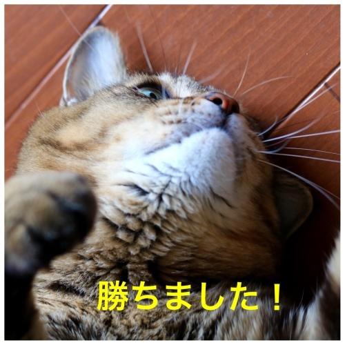 にゃんこ劇場「試合後のインタビュー」_c0366722_20291386.jpeg