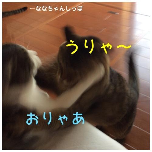 にゃんこ劇場「とらお君リベンジ編」_c0366722_20404321.jpeg