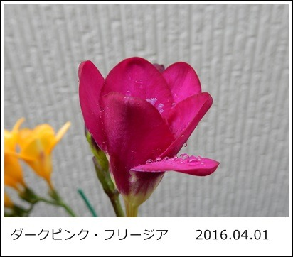 e0033229_18504862.jpg
