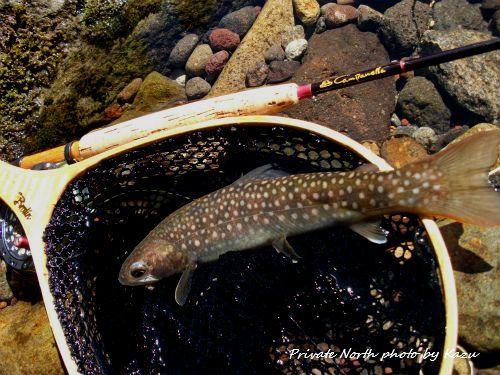 昨日の釣り2_d0261148_19042200.jpg