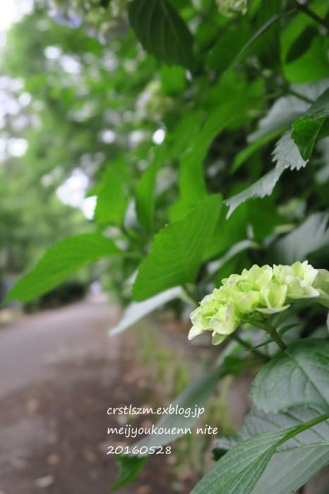 紫陽花の道_e0348754_09484949.jpg