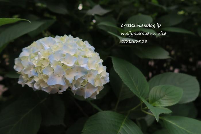 紫陽花の道_e0348754_09524709.jpg