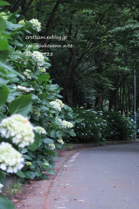 紫陽花の道_e0348754_11043032.jpg