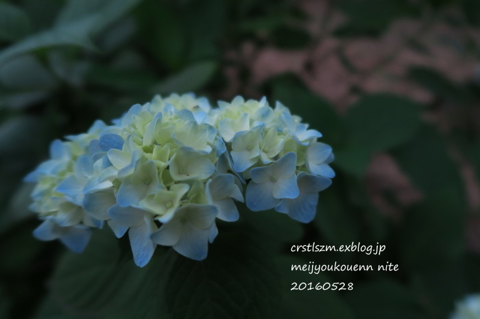 紫陽花の道_e0348754_11104616.jpg