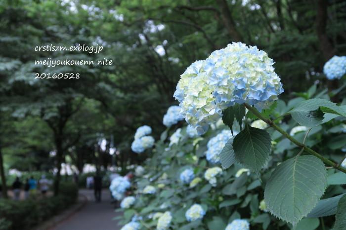 紫陽花の道_e0348754_11114286.jpg