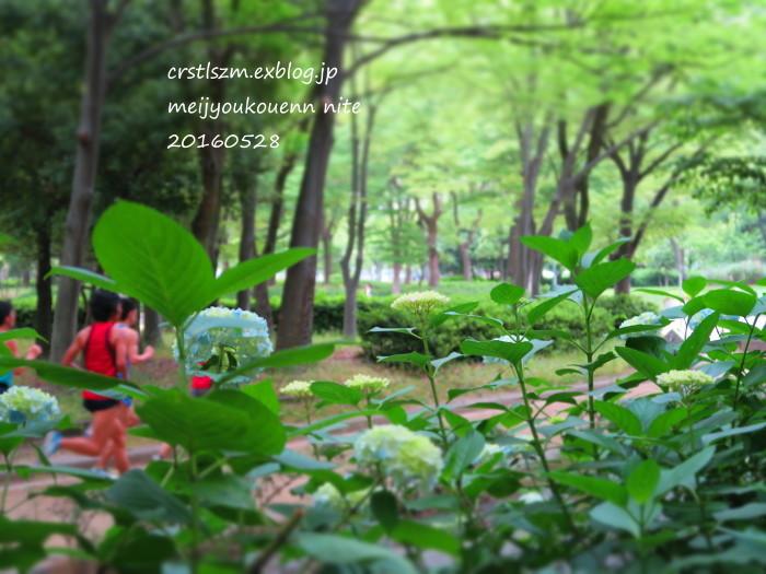 紫陽花の道_e0348754_11251135.jpg
