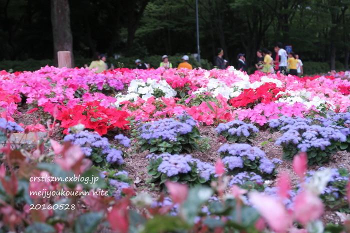 爽やかな 朝さんぽ_e0348754_11333198.jpg