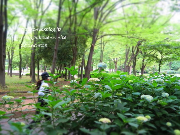 爽やかな 朝さんぽ_e0348754_11405317.jpg