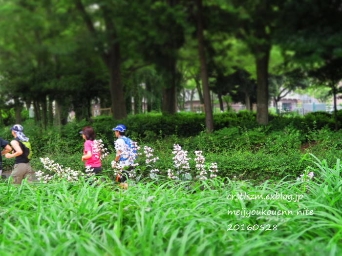 爽やかな 朝さんぽ_e0348754_11413473.jpg