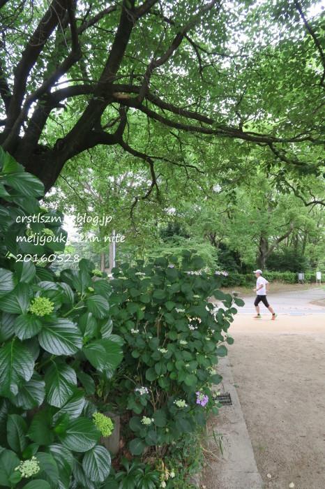 爽やかな 朝さんぽ_e0348754_11421035.jpg