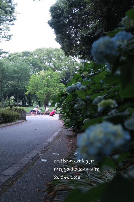 爽やかな 朝さんぽ_e0348754_11453862.jpg