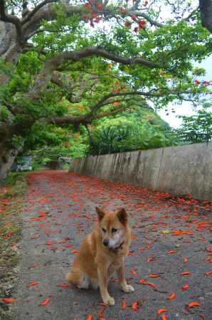 お迎え犬コロ♪_e0028387_1651428.jpg
