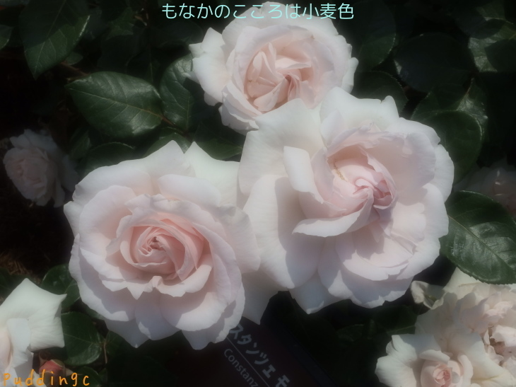 e0320808_17521296.jpg