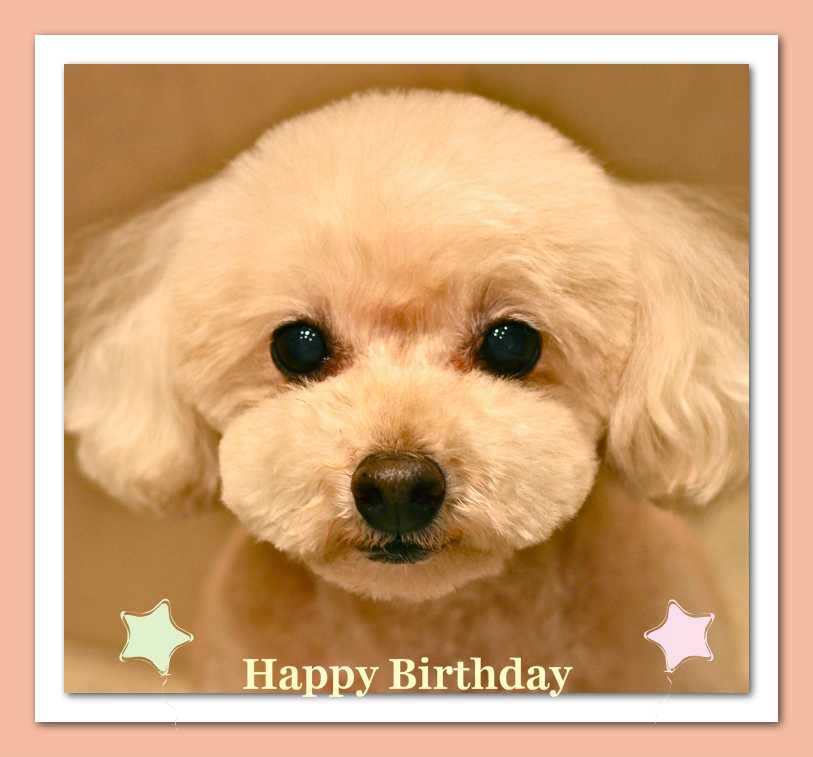 Happy Birthday プリマちゃん♡_d0060413_19341753.jpg