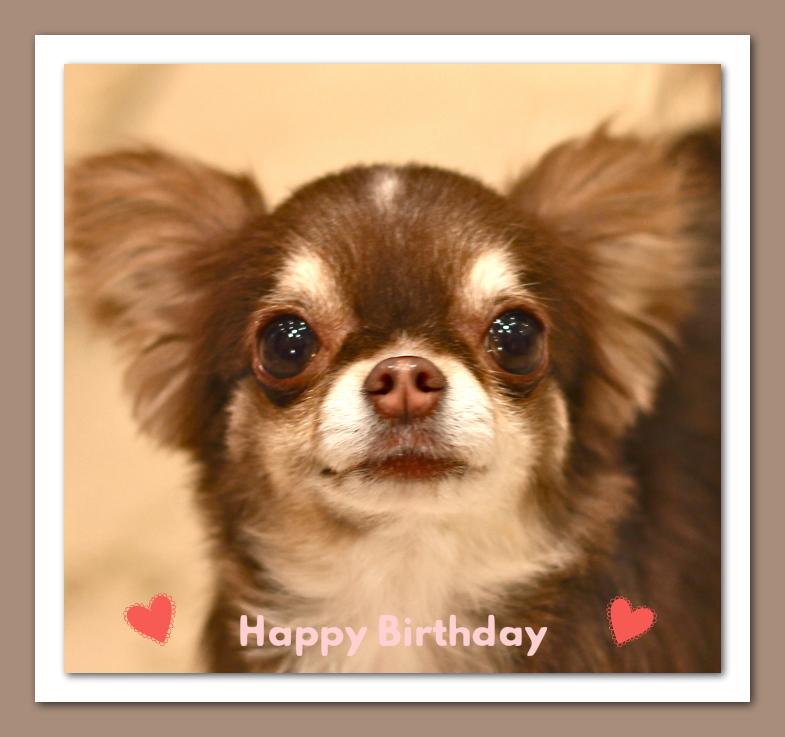 Happy Birthday♡ニーナちゃん_d0060413_19485993.jpg