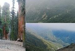 キングスキャニオンからセコイア国立公園へ_a0177314_16143903.jpg
