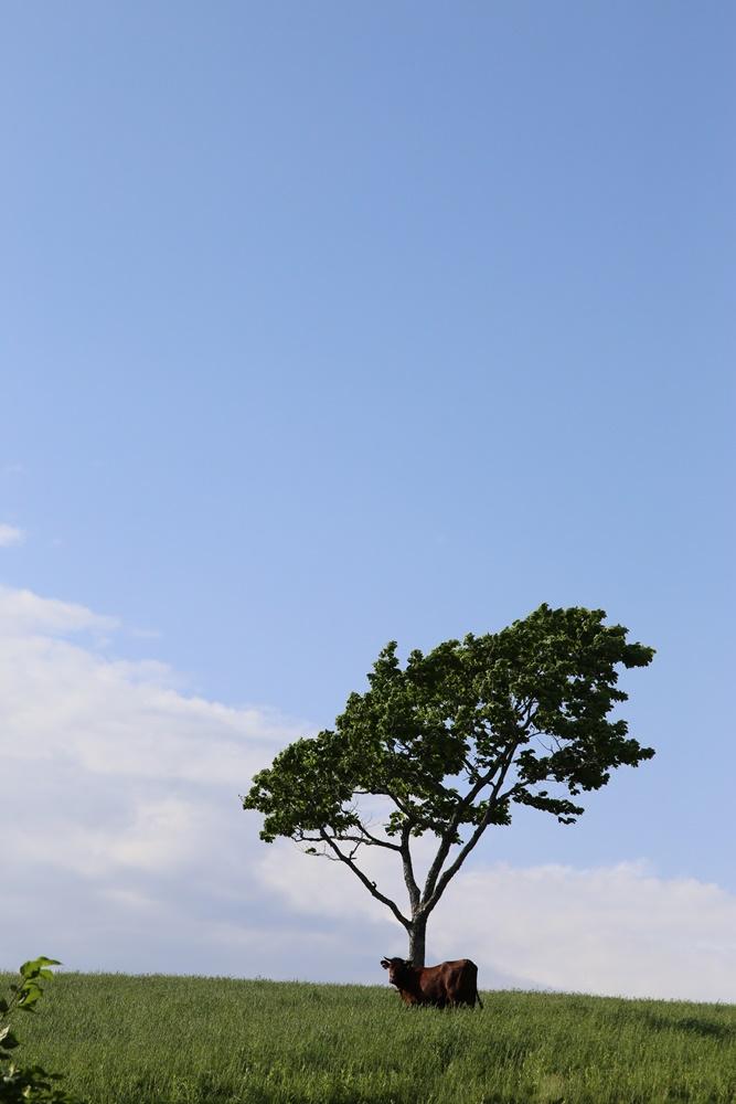 荒川高原に_c0111229_20141080.jpg