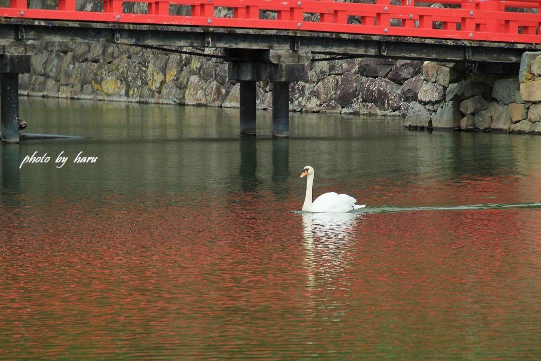 松本城_f0297537_09364419.jpg