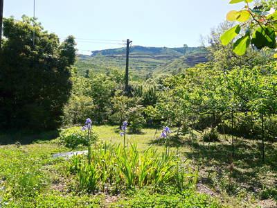 株式会社旬援隊敷地内の様子 ここで育てる果樹の花と果実_a0254656_18512791.jpg