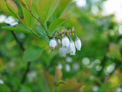 株式会社旬援隊敷地内の様子 ここで育てる果樹の花と果実_a0254656_19264696.jpg