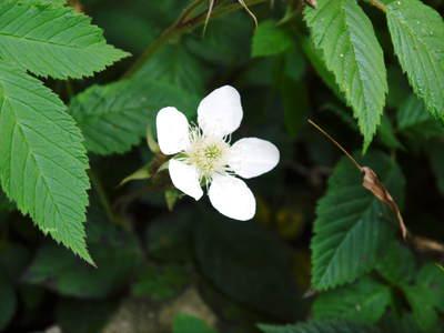 株式会社旬援隊敷地内の様子 ここで育てる果樹の花と果実_a0254656_19512061.jpg
