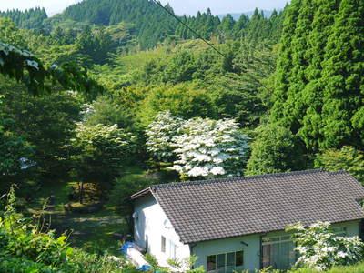 株式会社旬援隊敷地内の様子 ここで育てる果樹の花と果実_a0254656_20192236.jpg