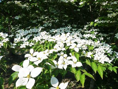 株式会社旬援隊敷地内の様子 ここで育てる果樹の花と果実_a0254656_20202976.jpg
