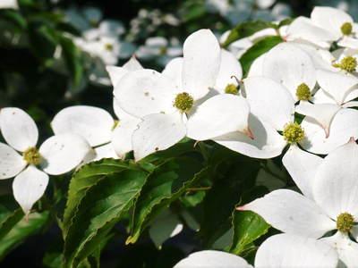 株式会社旬援隊敷地内の様子 ここで育てる果樹の花と果実_a0254656_20242699.jpg