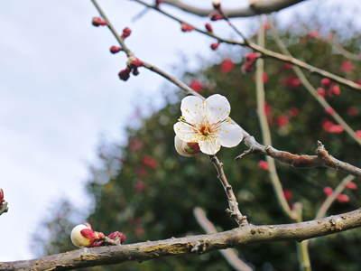 株式会社旬援隊敷地内の様子 ここで育てる果樹の花と果実_a0254656_20422452.jpg