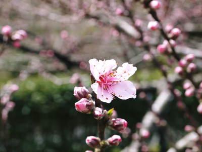 株式会社旬援隊敷地内の様子 ここで育てる果樹の花と果実_a0254656_2046182.jpg