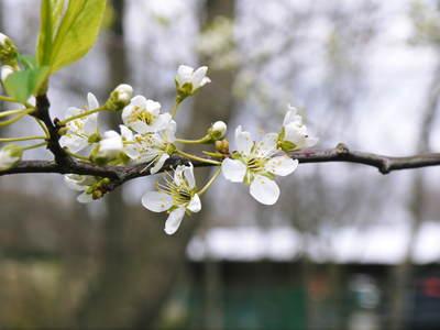 株式会社旬援隊敷地内の様子 ここで育てる果樹の花と果実_a0254656_20473456.jpg