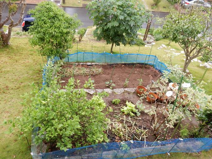'16,5,30(月)野菜の苗植えとひまわりの種まき!_f0060461_10422171.jpg