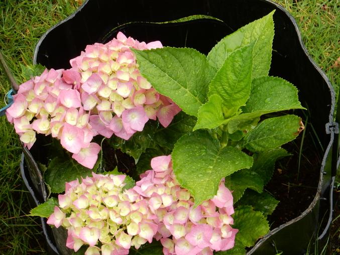 '16,5,30(月)野菜の苗植えとひまわりの種まき!_f0060461_1046557.jpg