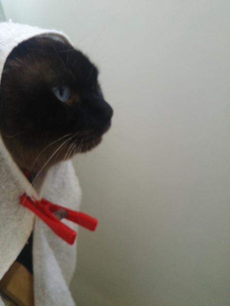 世界から猫がいなくなったら・・困る!_f0233665_15251945.jpg
