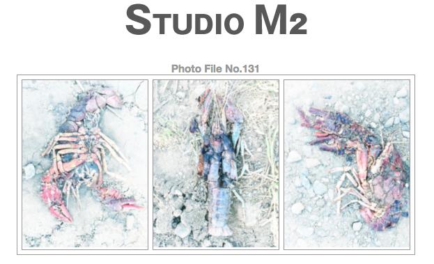 STUDIO M2 Photo File No.131 「田植えからの帰り道にて」_a0002672_18302320.jpg