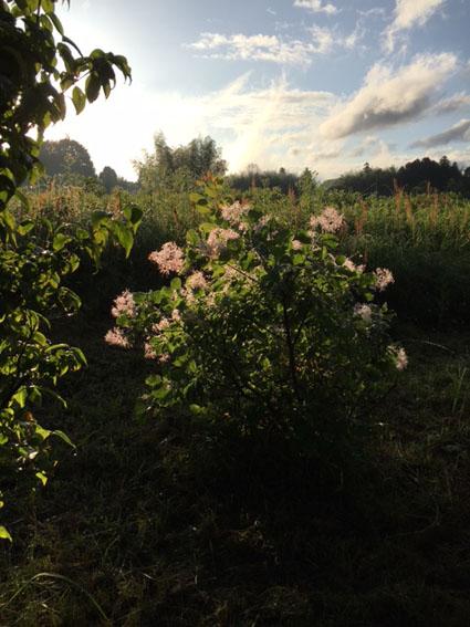 草刈り後の裏山で_c0334574_208373.jpg
